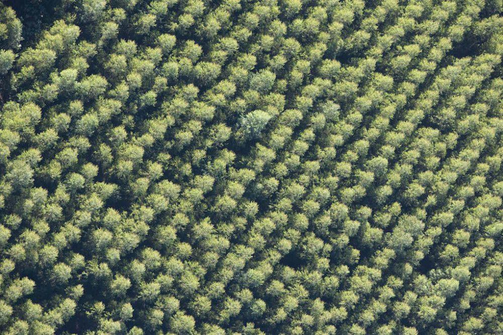 600 million sustainably farmed trees