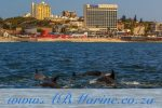Dolphin Watching Port Elizabeth