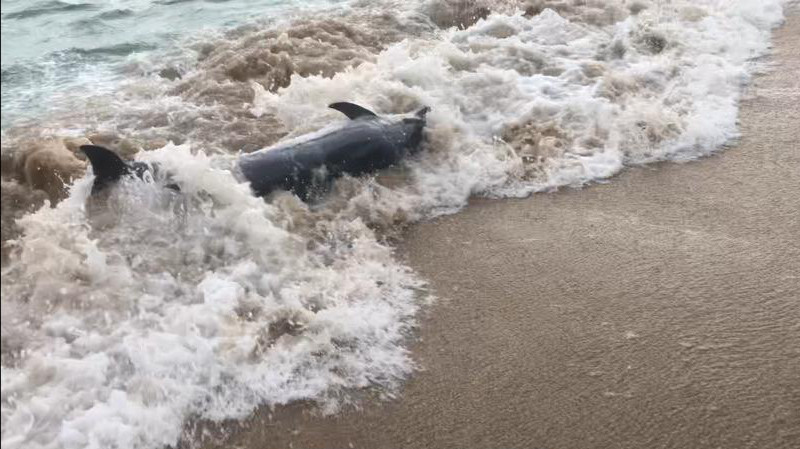 Commons Dolphin Paul Gardiner