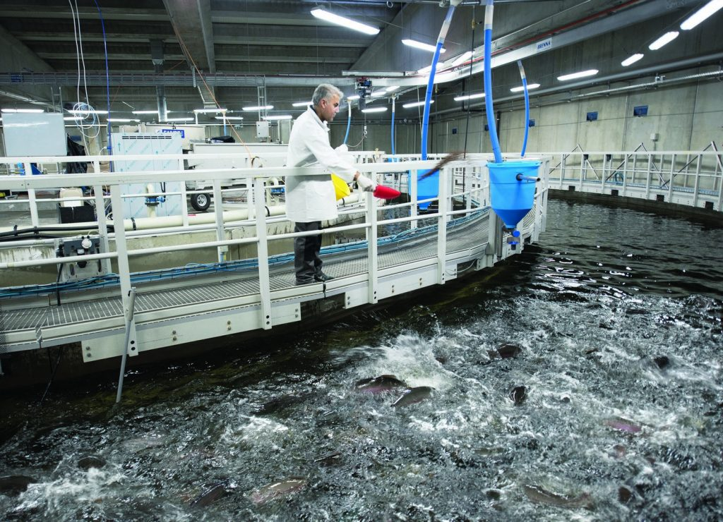 Veolia's Recirculating Aquaculture Systems treat and recirculate 99.6% of the water of an aquaculture system, with an up to 50% reduction in plant footprint.